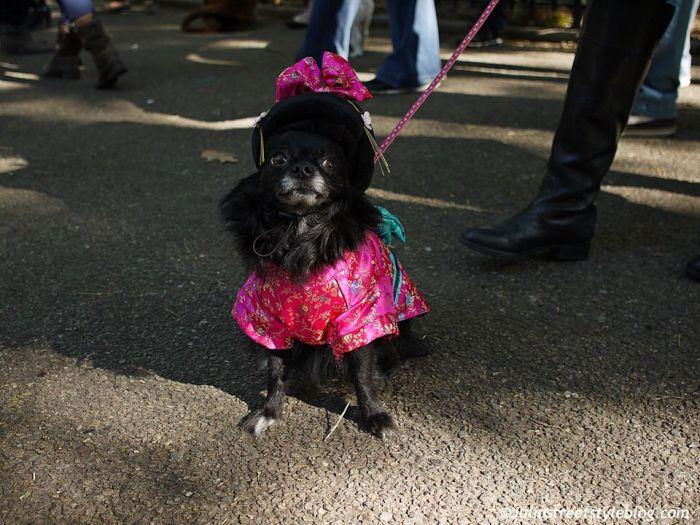 julia_luedtke_c_juliastreetstyleblog_dogs_hunde_parade_halloween_new_york_1-13
