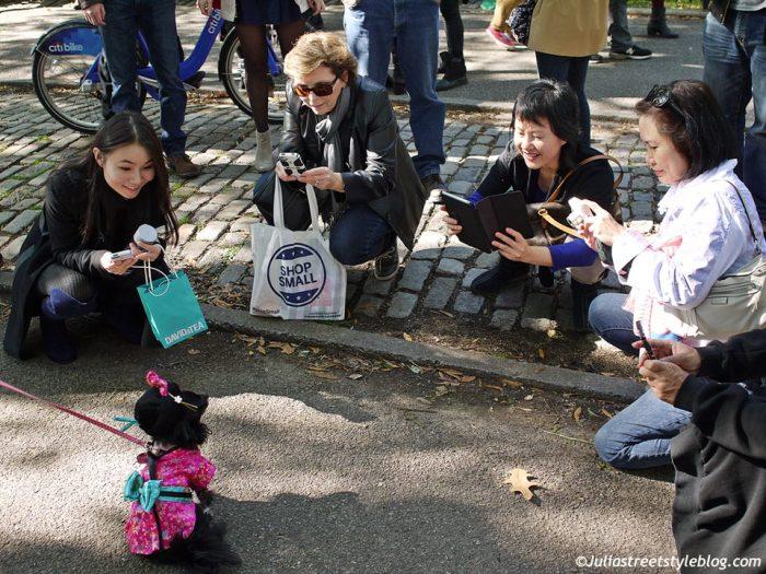 julia_luedtke_c_juliastreetstyleblog_dogs_hunde_parade_halloween_new_york_1-14