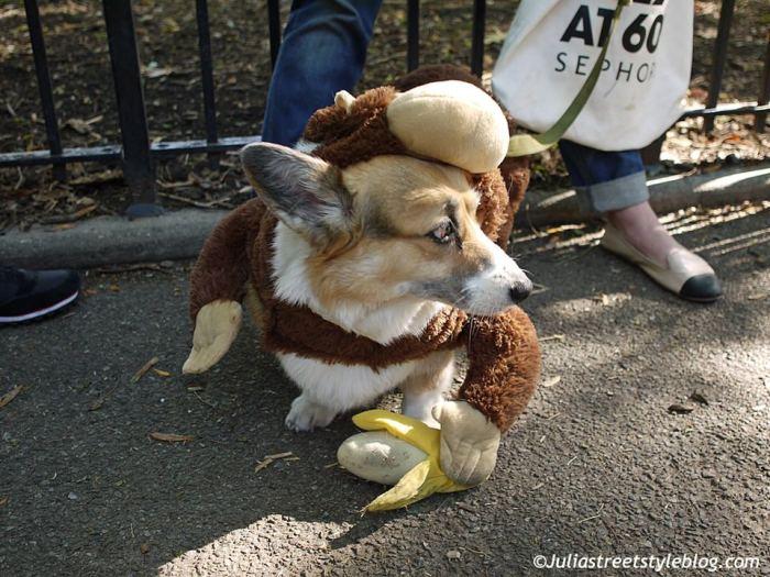 julia_luedtke_c_juliastreetstyleblog_dogs_hunde_parade_halloween_new_york_1-15
