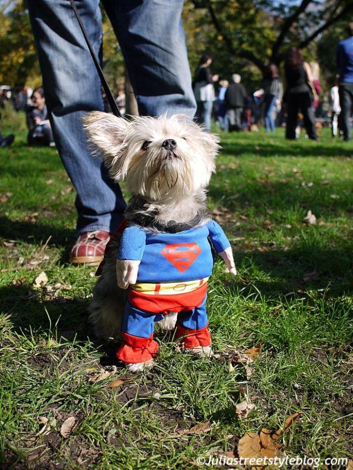 julia_luedtke_c_juliastreetstyleblog_dogs_hunde_parade_halloween_new_york_1-16