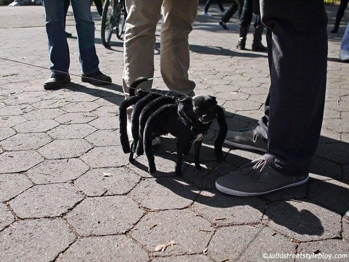 julia_luedtke_c_juliastreetstyleblog_dogs_hunde_parade_halloween_new_york_1-18