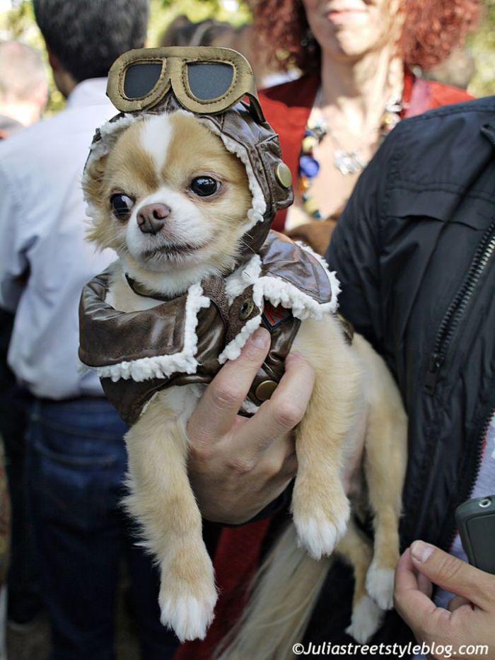 julia_luedtke_c_juliastreetstyleblog_dogs_hunde_parade_halloween_new_york_1-20