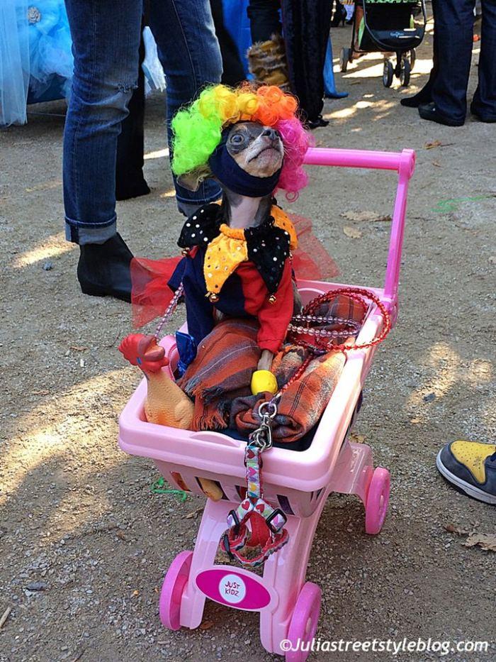 julia_luedtke_c_juliastreetstyleblog_dogs_hunde_parade_halloween_new_york_1-5