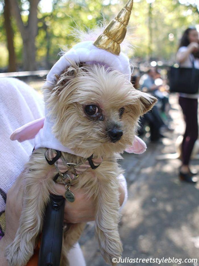 julia_luedtke_c_juliastreetstyleblog_dogs_hunde_parade_halloween_new_york_1-6