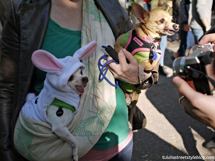julia_luedtke_c_juliastreetstyleblog_dogs_hunde_parade_halloween_new_york_1-7