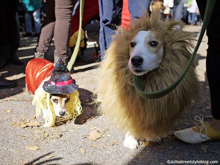 julia_luedtke_c_juliastreetstyleblog_dogs_hunde_parade_halloween_new_york_1-9