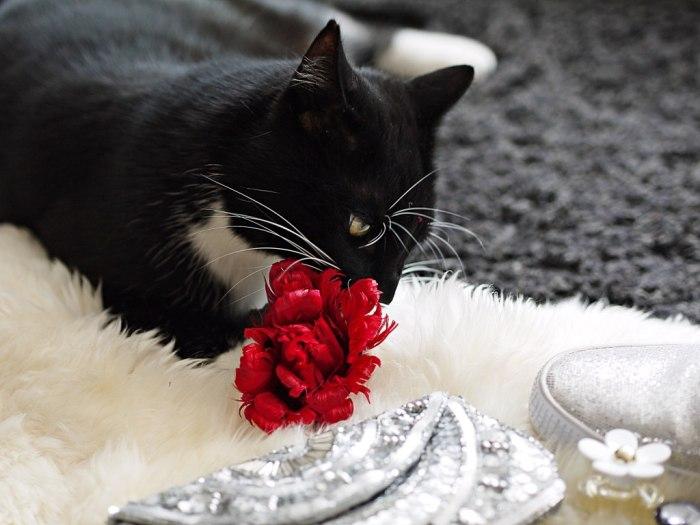 Julia_Luedtke_(C)_Julia_streetstyleblog_silver_clutch_cat_1.k